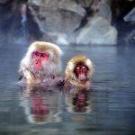 温泉に浸かるようなイベントで、子育ての悩みは解決するかもしれない